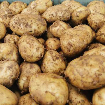 Box of Cornish potatoes